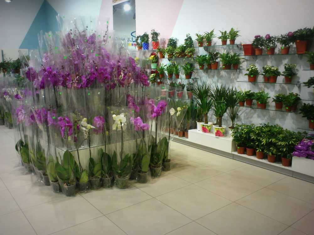 Миллиона цветов, донецк магазины цветов