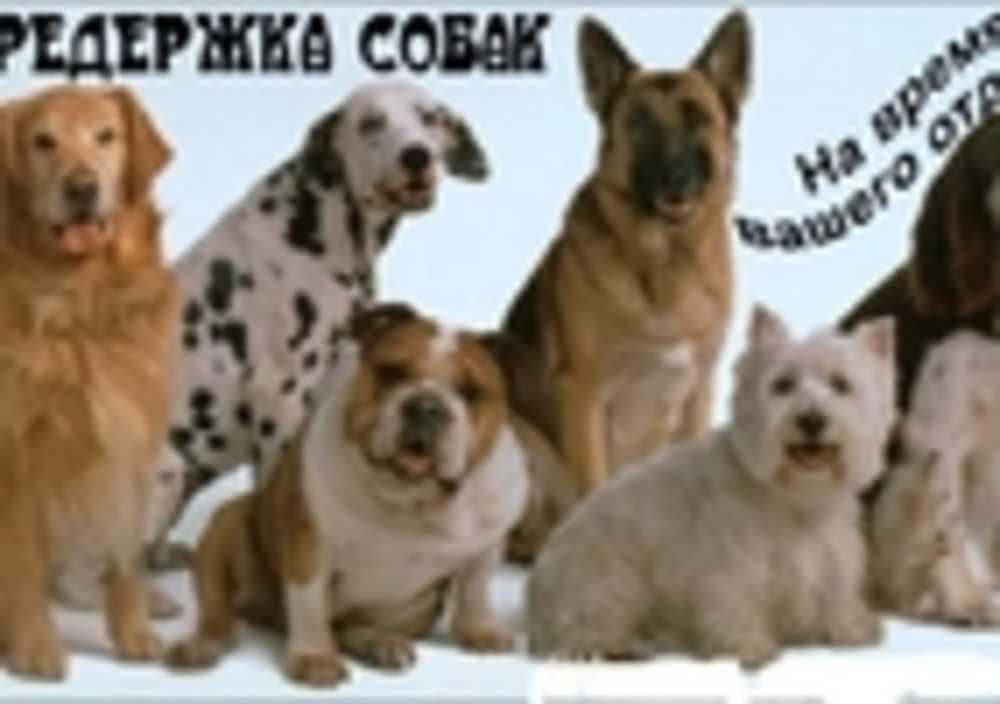 Передержка собак в Донецке,Макеевка. Зоогостиница